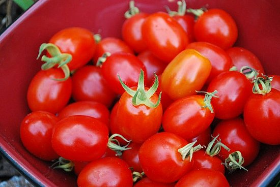Grape tomatoes from the garden