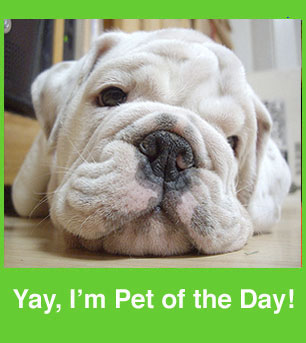 Add Your Lil Superstars to the Pet of the Day Group!