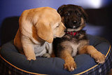 Pups of the Most Popular Dog Breeds Share an Adorable Kiss!