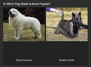 Take Your Pick With the Which Dog Breed Is More Popular Game