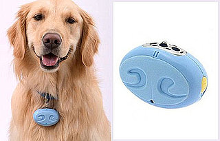 Allergy Sufferers, Make Your Pet Carry His Own Ionizer