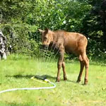 Sunday Funday Video: Mini Moose Loves the Sprinkler