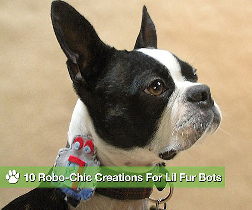 10 Robo-Chic Creations For Lil Fur Bots