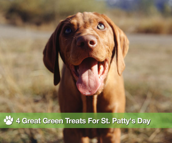 Healthy St. Patrick's Day Treats For Dogs