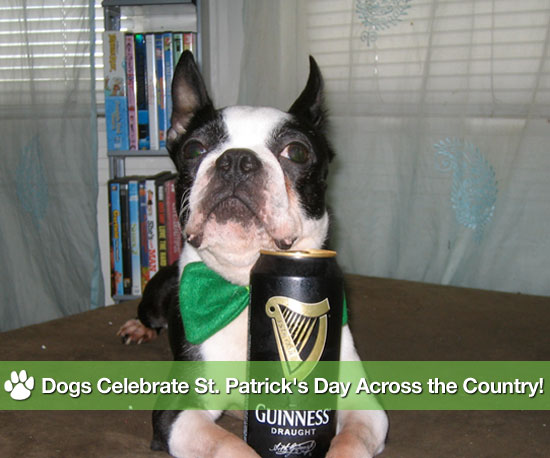 Dogs Celebrate St. Patrick's Day Across the Country!