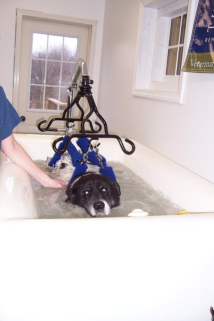 VetSystems Canine Whirlpool