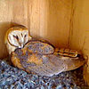 Owlet Cam: Get on &quot;Egg Hatch Watch&quot; With Molly