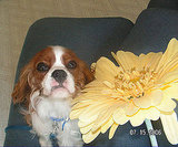Puppy-Size Floral Decor