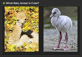 Use a Few Free Minutes to Play Our Baby Animal Faceoff!
