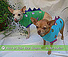 How to Train Your Dragon Dog Costumes