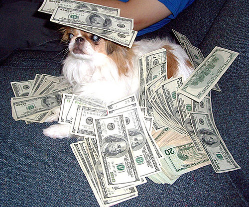 Pictures of Cute Dogs With Money