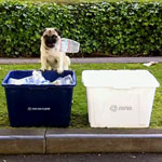 Pug That Recycles