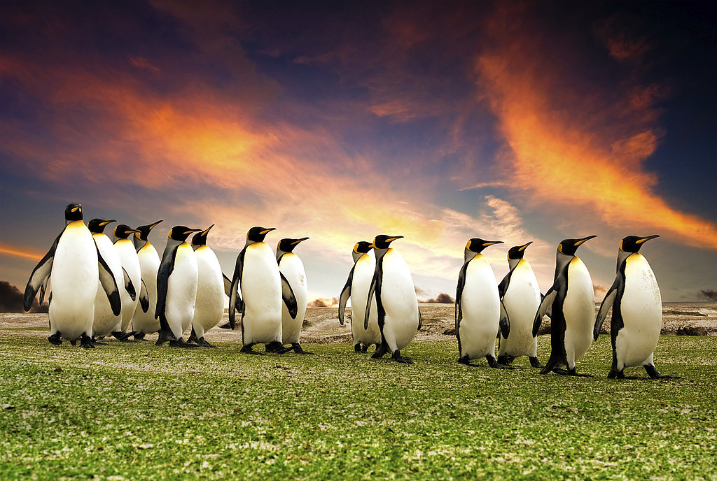 Pictures of Penguins For World Penguin Day
