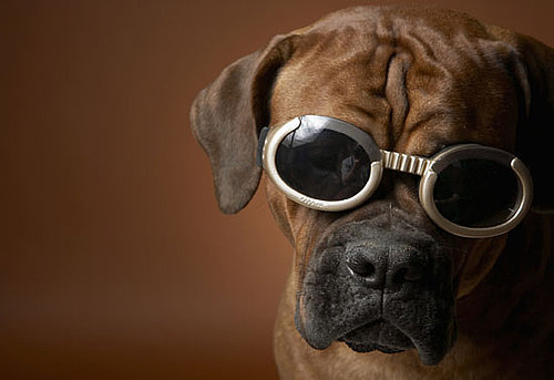 Doggles For Dogs