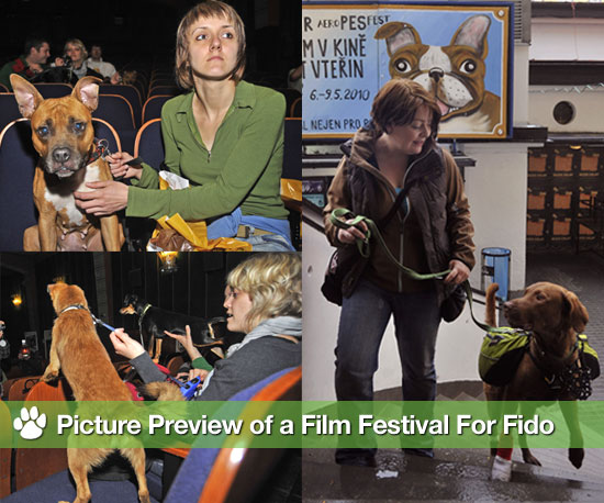 Picture Preview of a Film Festival For Fido