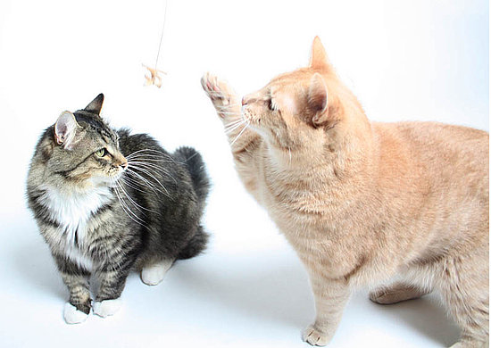 Milo and Minou