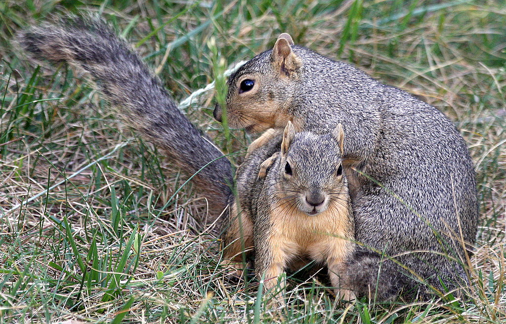 Pictures of Squirrels Playing Leapfrog