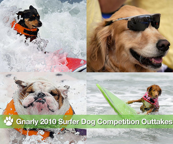 Gnarly 2010 Surfer Dog Competition Outtakes