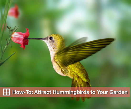 How-To: Attract Hummingbirds to Your Garden