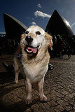 Music For Dogs Festival Takes Sydney By Storm