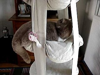 Trapeze For Cats