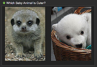 Pick the Cuter Zoo Baby For a Chance to Win!