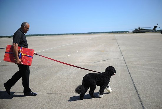 It's Off to the Vineyard For Bo Obama!