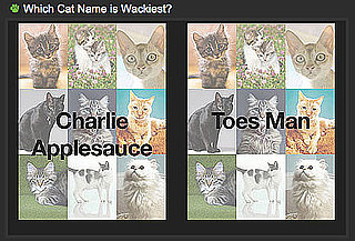What Are the Weirdest Dog Names and What Are the Weirdest Cat Names?