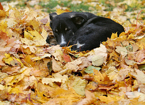 Why Do Dogs Love Leaves?