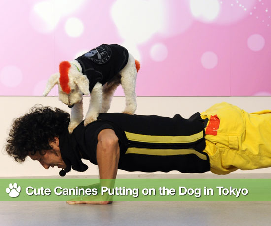 Cute Canines Putting on the Dog in Tokyo