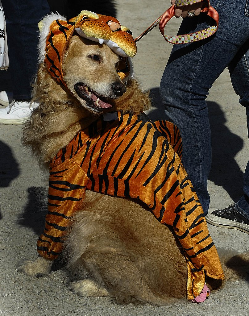 And Tigers and Dogs
