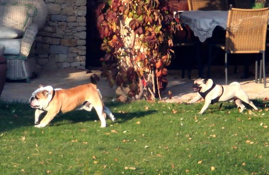 Jolie-Pitt Pooches Enjoy Playtime