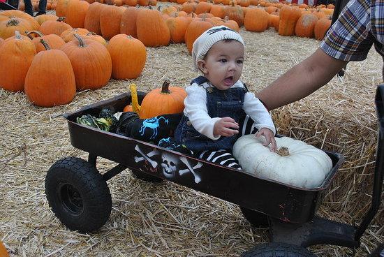 Olivia's 1st Pumpkin Patch