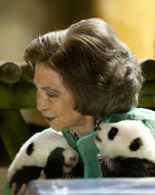 Madrid&#039;s Baby Pandas Greet the Queen