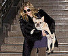 Slide Picture of Ashley Olsen Arriving Into LA With Her French Bulldog