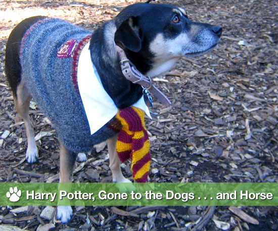 Pictures of Pets Dressed Up as Harry Potter For Harry Potter and the Deathly Hallows, J.K. Rowling's Book
