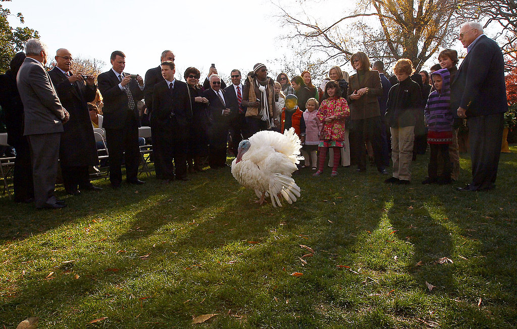 Apple and Cider Are the Presidentially Pardoned Turkeys of 2010