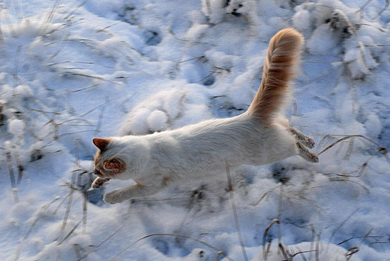Faster than a freezing bullet! Source: Flickr user Rob Lee
