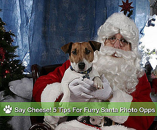 PopSugar Living Highlights: 5 Tips For Furry Santa Photo Opps