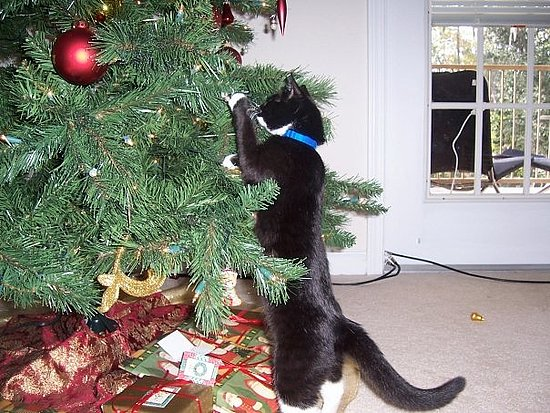 Kitties Love Christmas