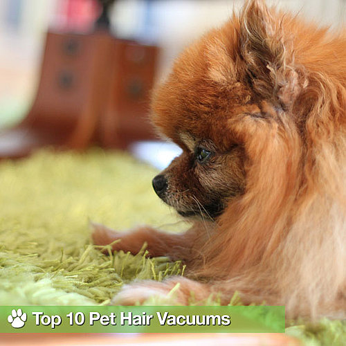 Best Vacuums For Pet Hair on Carpet and Hardwood