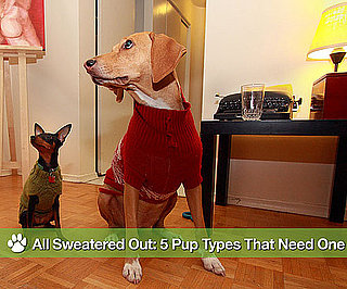 Sweaters on Dogs in Winter