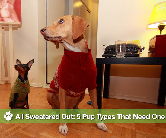 All Sweatered Out: 5 Pup Types That Need One
