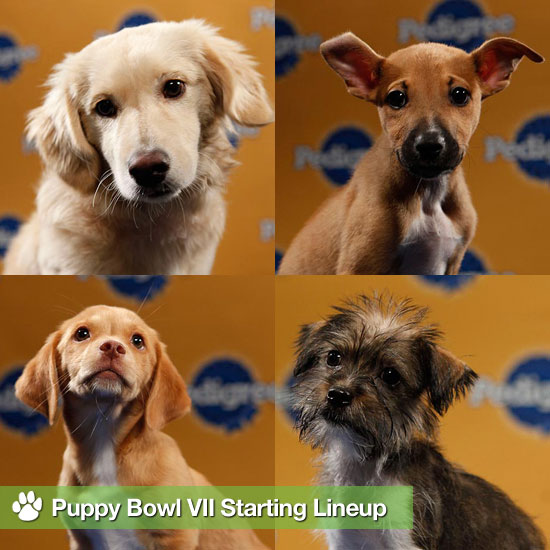 Puppy Bowl VII Starting Lineup