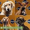 Super Bowl Puppy Bowl VII Pictures