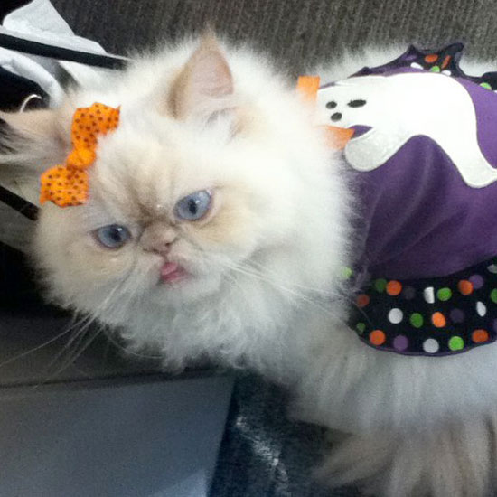 Happy Purrday, Fashion Kitty Luna!