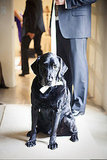 For this Napa Valley wedding, the pair's pup Wizard took part in the celebration.  Photo by onelove photography
