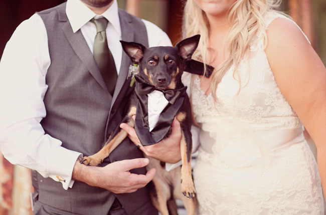 Love this dressed-up four-legged fella!  Photo by SimplyBloom Photography
