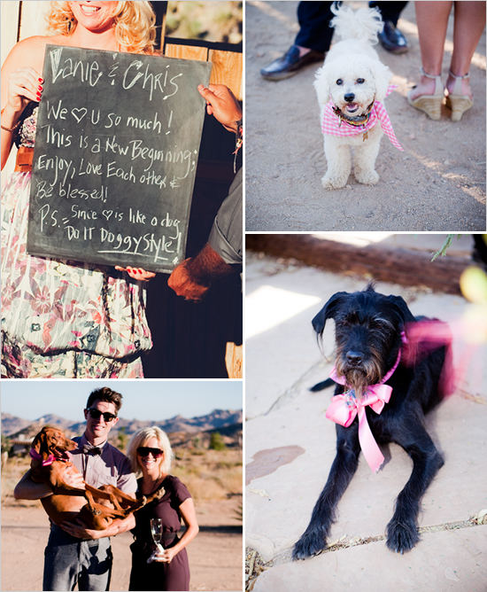 Check out all the festively dressed dogs in this wedding!  Photo by Love Me Sailor