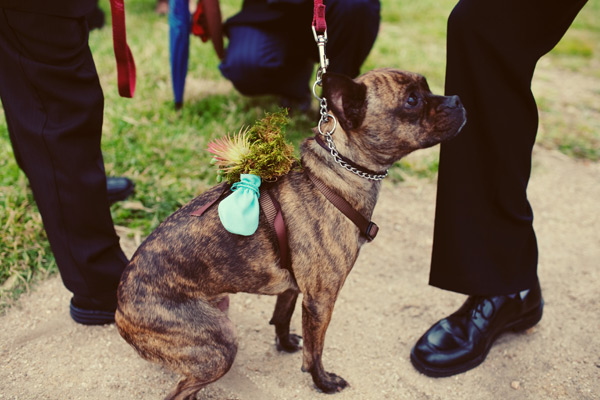At their Northern California wedding, this couple's pup Batgirl was a sweet ring bearer with a Tillandsia- and moss-decorated harness.  Photo by Featherlove Photography